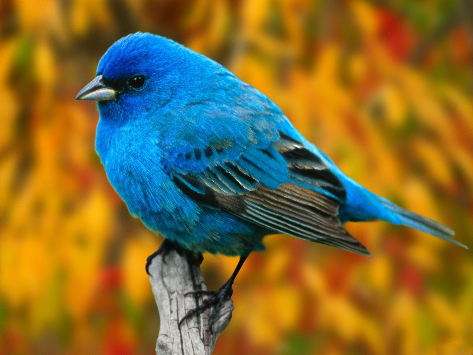 bird__hd_wallpapers0